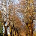 Avenue Of Trees by Rod Jones