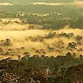Awakening Forest by Kim Briers