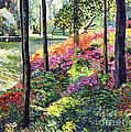 Azalea Forest Grove by David Lloyd Glover