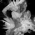 Azalea Grouping by Bruce Bley