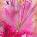 Azalea by Judi Bagwell