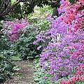 Azalea Trail by Living Color Photography Lorraine Lynch