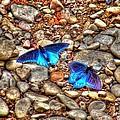 Azul by Andrew Webb