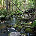 Babbling Brook by Greg DeBeck