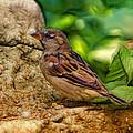 Baby Birdie by Linda Tiepelman