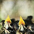 Baby Birds by Darren Fisher