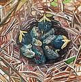 Baby Birds by Rachel Biddlecome