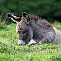 Baby Donkey by Deborah Smith