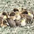 Baby Ducks by Peg Runyan