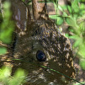 Baby Eastern Cottontail Rabbit Dmam011 by Gerry Gantt