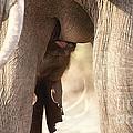Baby Elephant Nursing by Mareko Marciniak