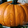 Baby Pumpkin Tears by Susan Herber