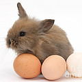 Baby Rabbit With Eggs by Mark Taylor