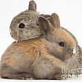 Baby Rabbits by Mark Taylor
