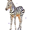 Baby Zebra Nursery Animal Art by Alison Fennell