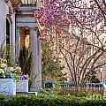 Back Bay Spring by Susan Cole Kelly
