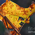 Back-lit Golden Leaf by Optical Playground By MP Ray