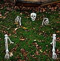Back Yard Bone Yard by LeeAnn McLaneGoetz McLaneGoetzStudioLLCcom