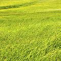Background Of Green Summer Hay Field In Maine by Keith Webber Jr