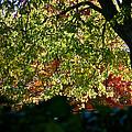 Backlit Autumn by Susan Herber