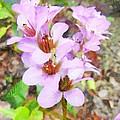 Backyard Blooms by Steve Taylor