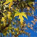 Backyard Leaves by Debbie Portwood