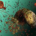 Bacteriophage Viruses by Karsten Schneider