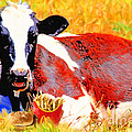 Bad Cow . 7d1279 by Wingsdomain Art and Photography