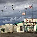 Bait Shop By Aransas Pass In Texas by Randall Nyhof