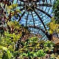 Balboa Park Botanical Gardens by Russ Harris