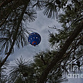Balloon In The Pines by Kim Henderson
