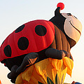 Balloon-ladybug-7616 by Gary Gingrich Galleries