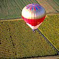 Ballooning Over Burgundy by Carl Purcell