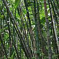 Bamboo 2 by Jennifer Bright