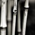 Bamboo by Bob Wall