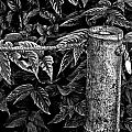 Bamboo Border by Burney Lieberman
