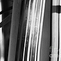 Bamboo Closeup by Gaspar Avila