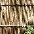 Bamboo Fence by Don Mason