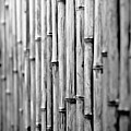 Bamboo Fence by George Imrie Photography