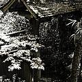 Bamboo Garden -2 by Alan Hausenflock