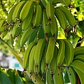 Bananas by Dany Lison