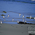 Band Of Seagulls by Diego Re