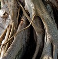 Banyan by Joseph Yarbrough