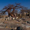 Baobab On The Rocks by Mareko Marciniak