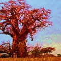 Baobab Tree by Asbjorn Lonvig