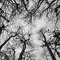 Bare Cypress by Christine Stonebridge
