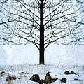 Bare Tree In Winter by Jill Battaglia