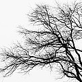 Bare Tree Silhouette by Larry Ricker