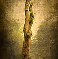 Bare Tree by Svetlana Sewell