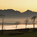 Bare Trees At Coast by Image by Peter Ribbeck